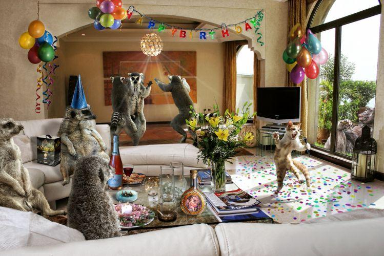 funny celebration humor animals cats music wallpaper