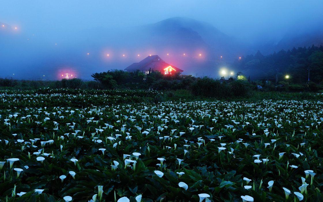 night fog mountains home lights field flowers rocks wallpaper