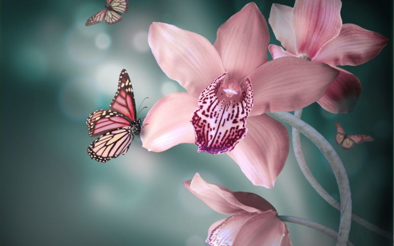 orchid flowers pink white butterflies wallpaper