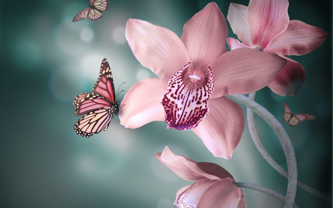 Orchid Flowers Pink White Butterflies Wallpaper 2560x1600