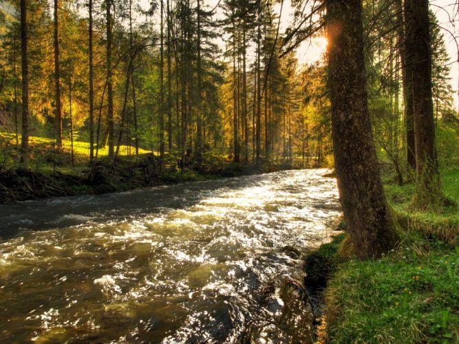 Rivers Austria Schwarzbach Trees Nature wallpaper