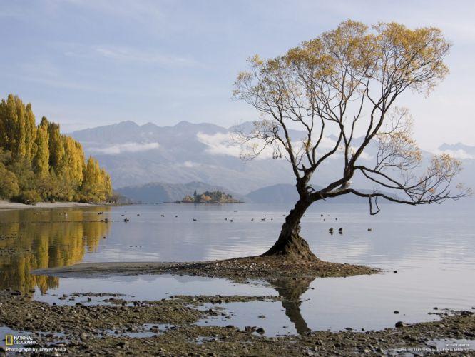 Tree Lake Landscape wallpaper
