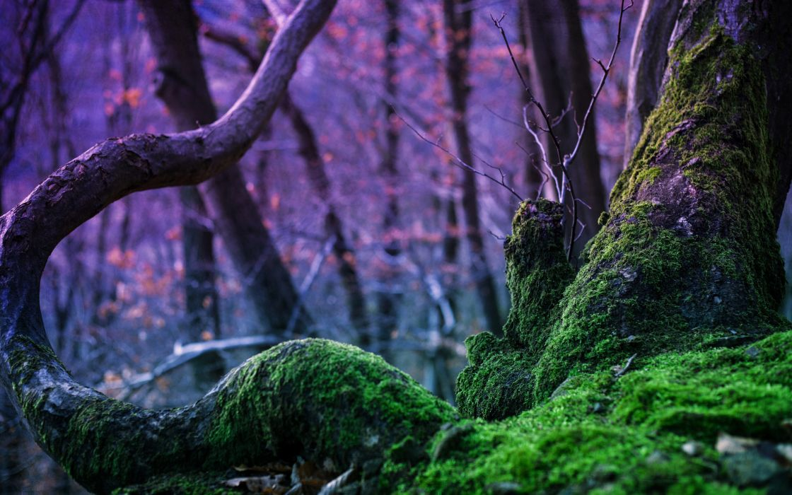 forest moss nature tree trees wallpaper
