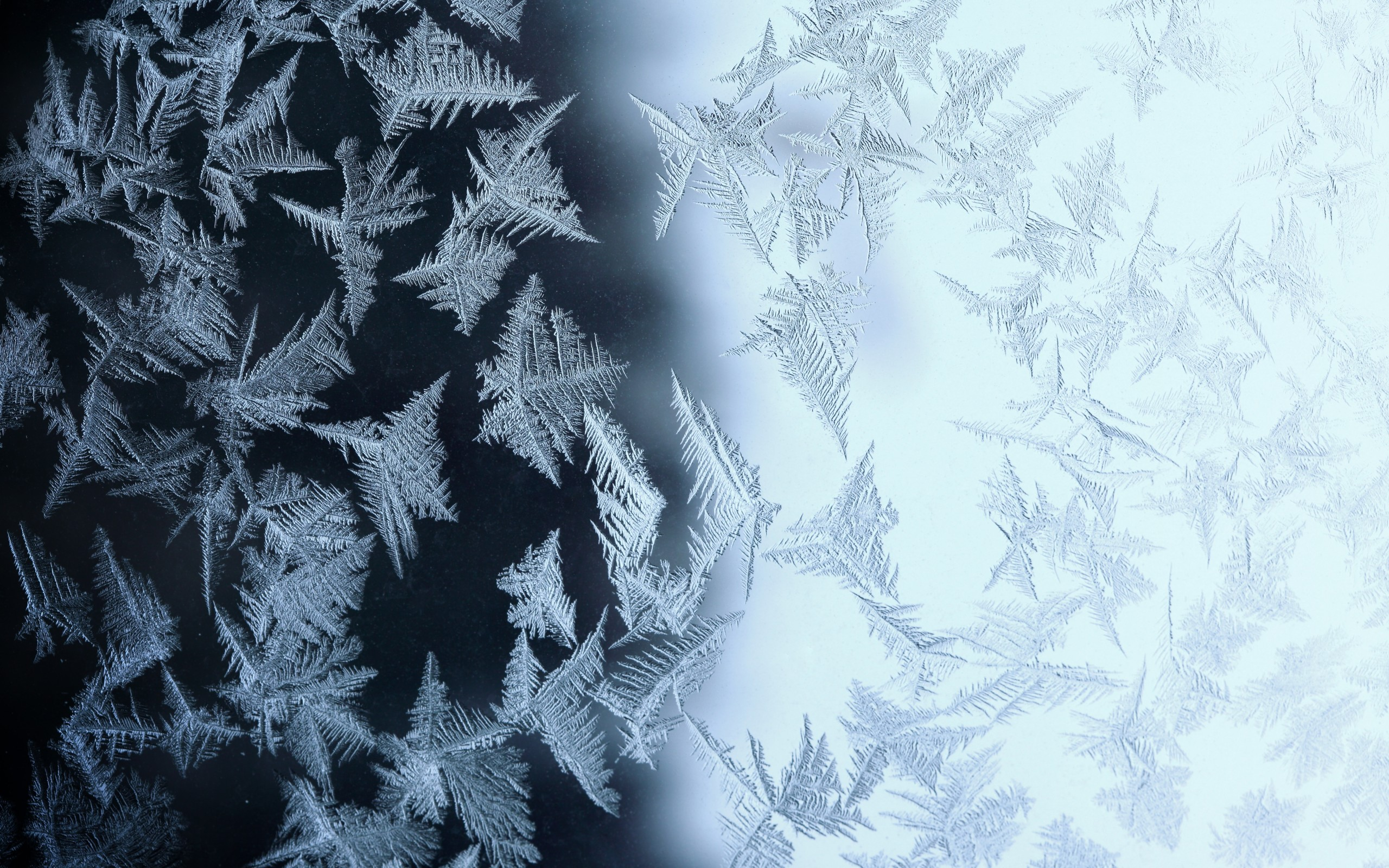frost on glass wallpapers - photo #21