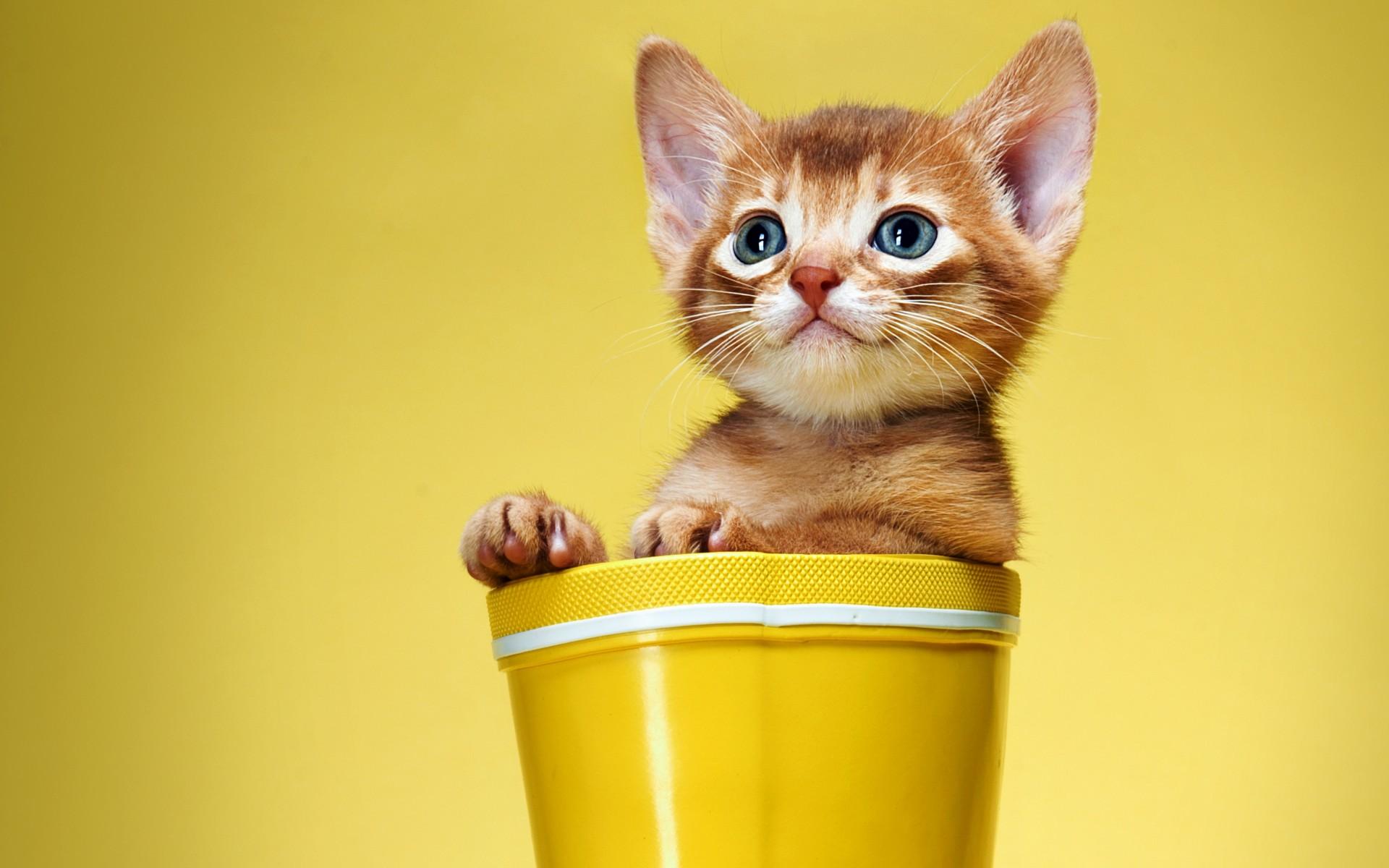 Cool Cat Wallpaper 1920x1200 - 3f08c8305ab0c161be16b418de69eb40  Trends_895677 .jpg