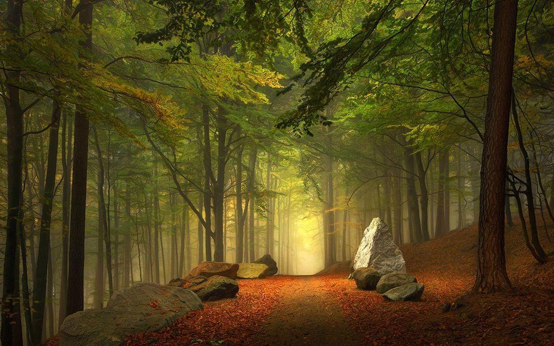 nature landscape forest road rocks fog wallpaper