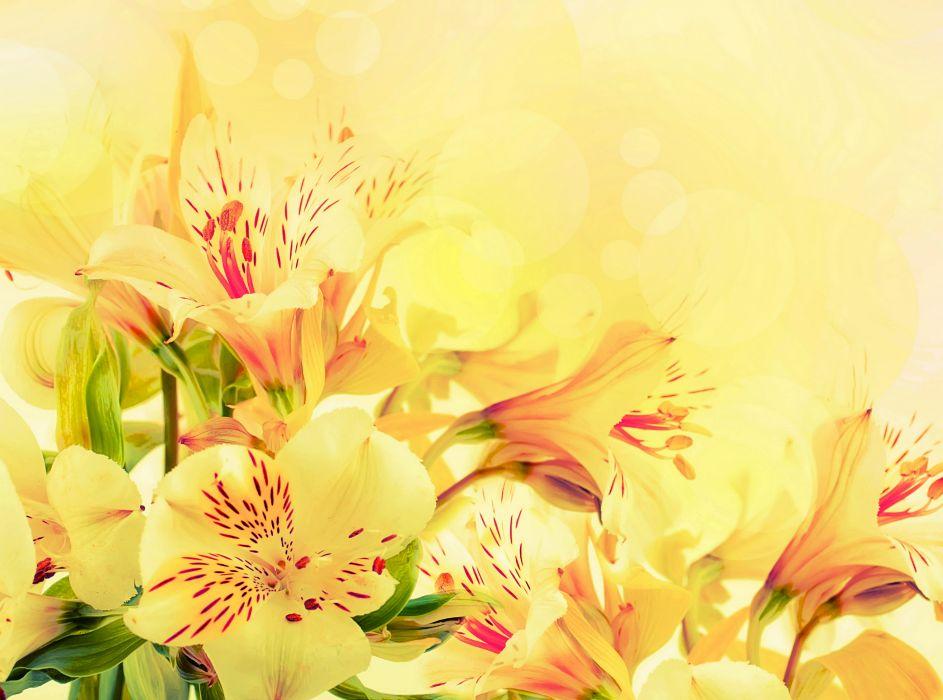 Alstroemeria yellow flowers wallpaper 2628x1951 78549 wallpaperup alstroemeria yellow flowers wallpaper mightylinksfo