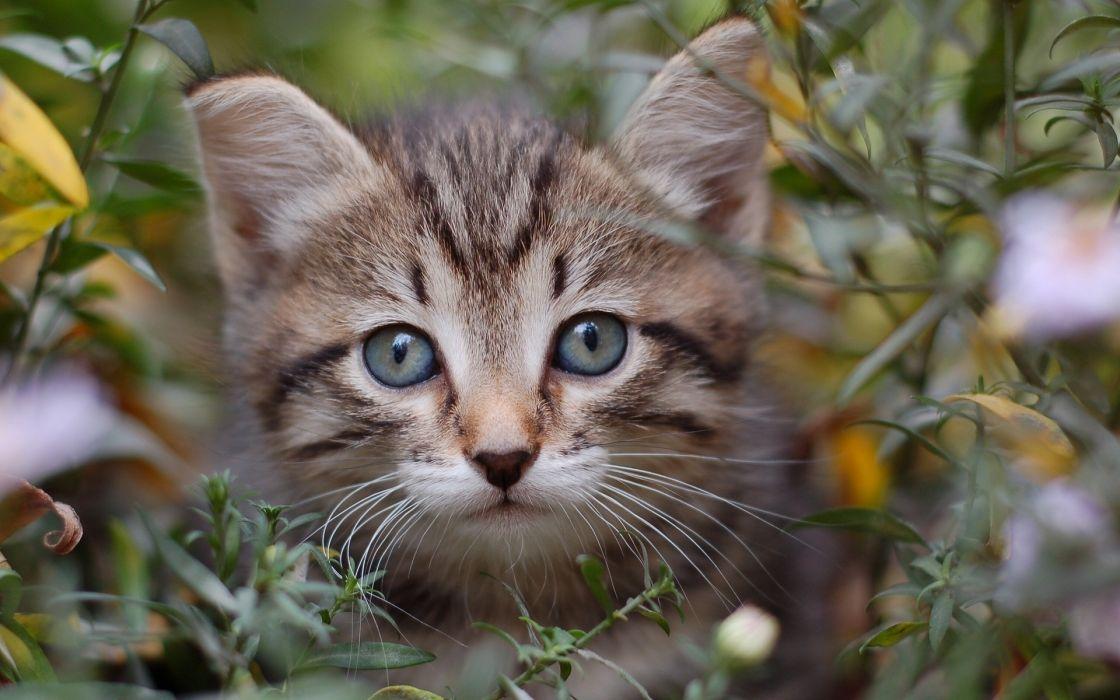 cat  muzzle  eyes  grass wallpaper