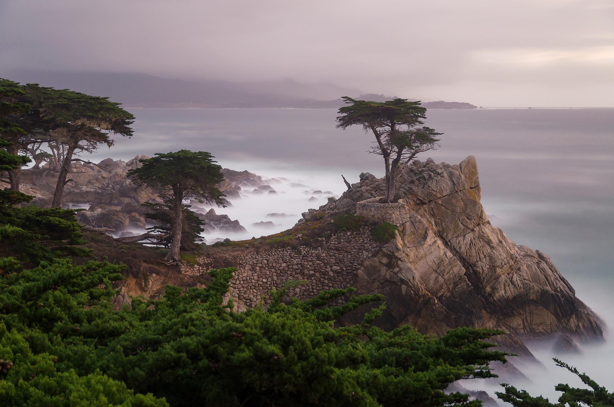 дерево море высота  № 964239 бесплатно