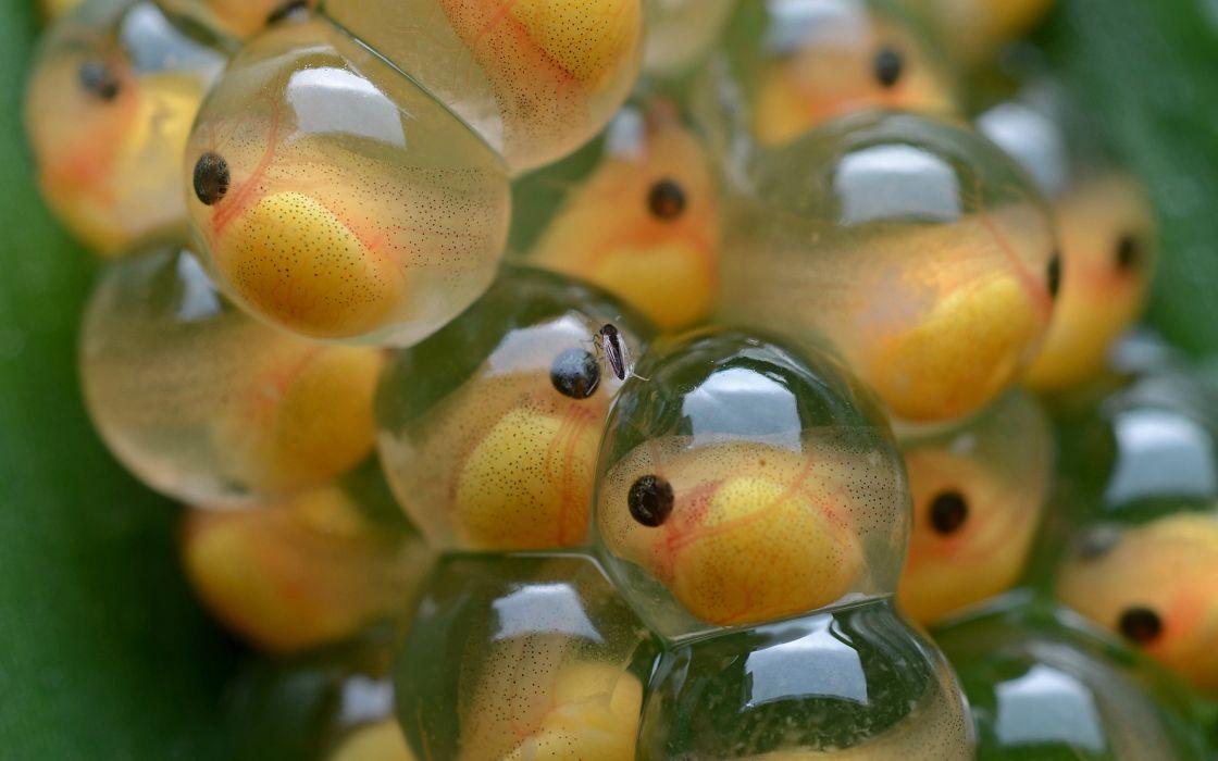 Eggs Macro wallpaper