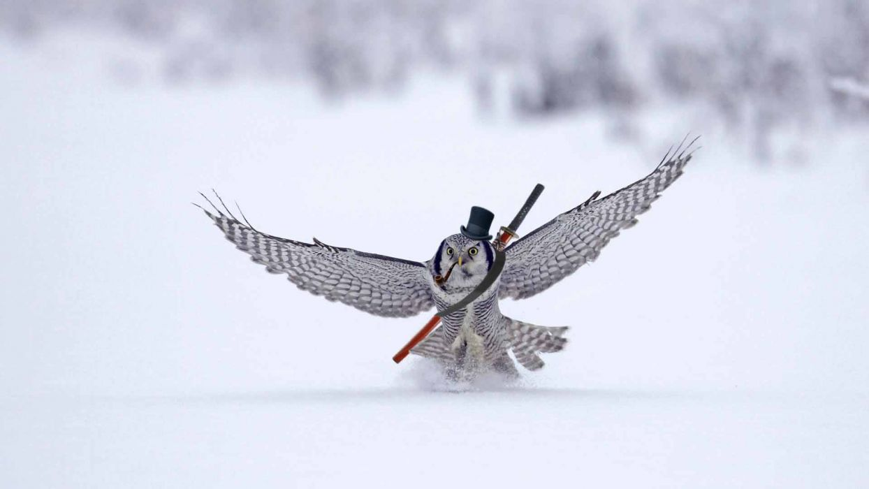 Owl Katana Sword Bird Snow Top Hat humor wallpaper