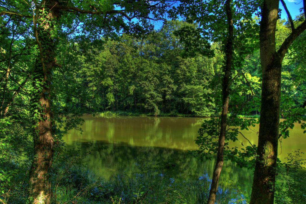 Rivers Germany Trees Nature wallpaper