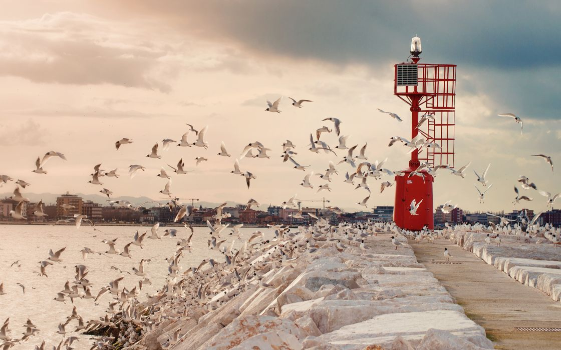 Seagulls Birds lighthouse wallpaper