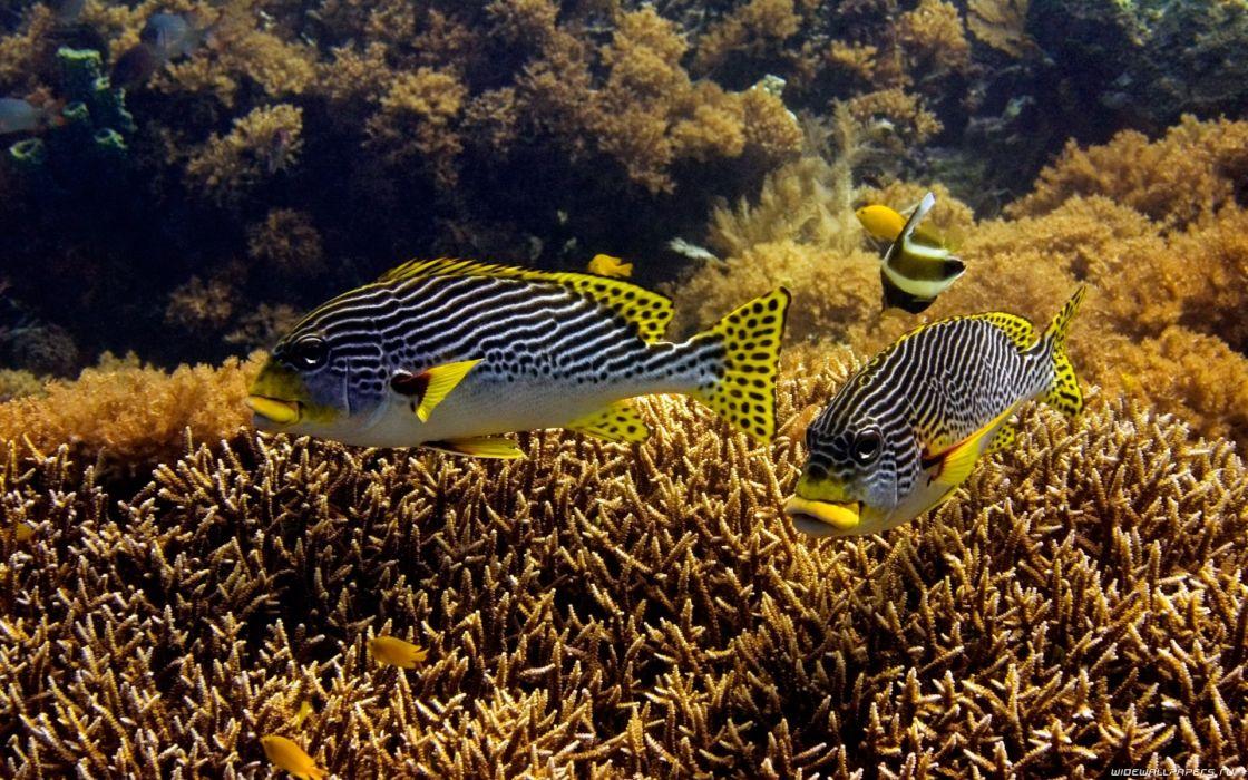 underwater sea Animals Fish ocean wallpaper