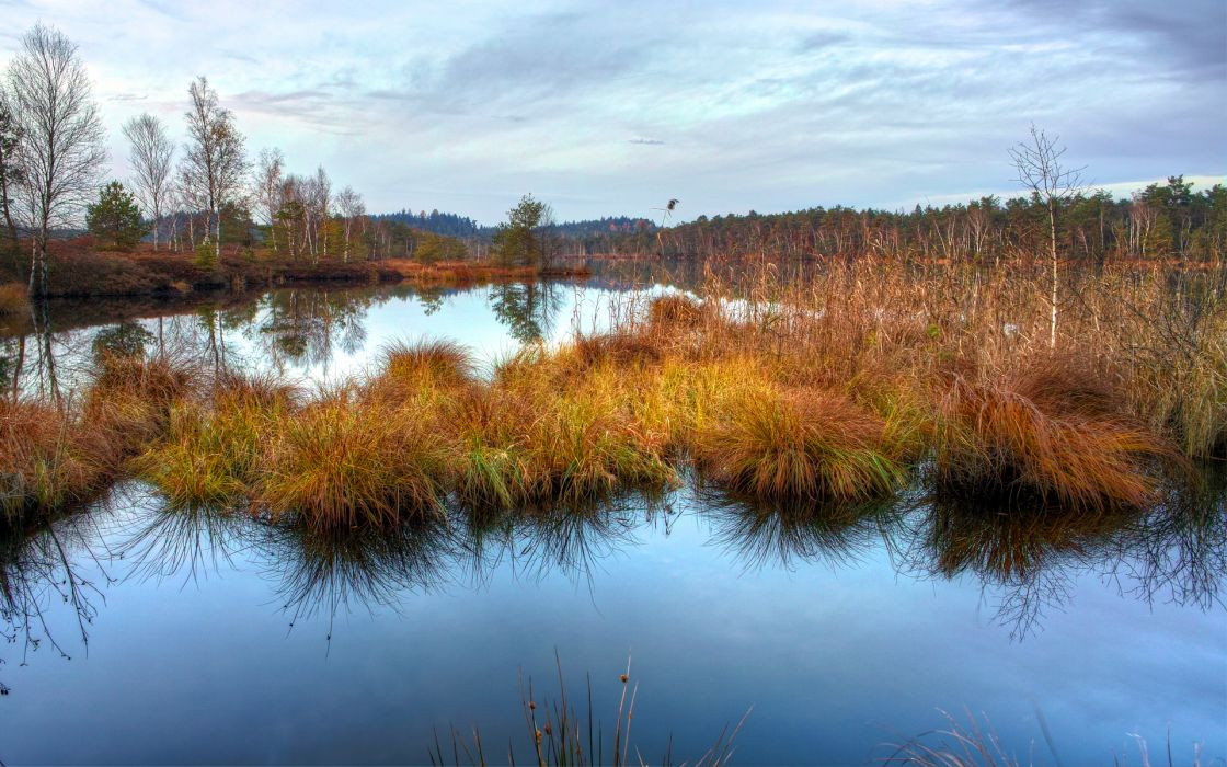 water  grass  dry  autumn  marsh  smooth surface  reflection wallpaper