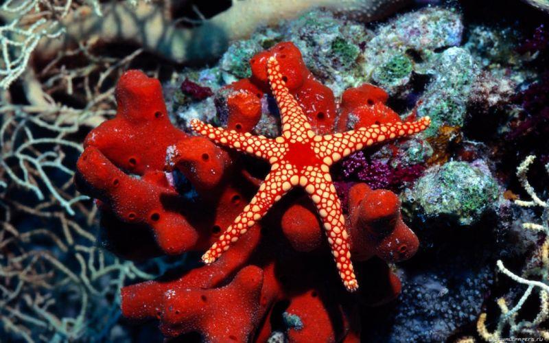 water fish underwater sea starfish wallpaper