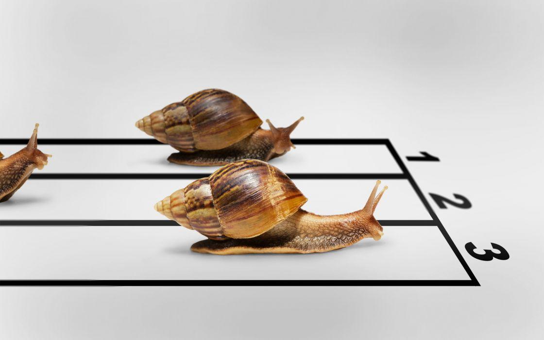 winner humor race Snails finish wallpaper