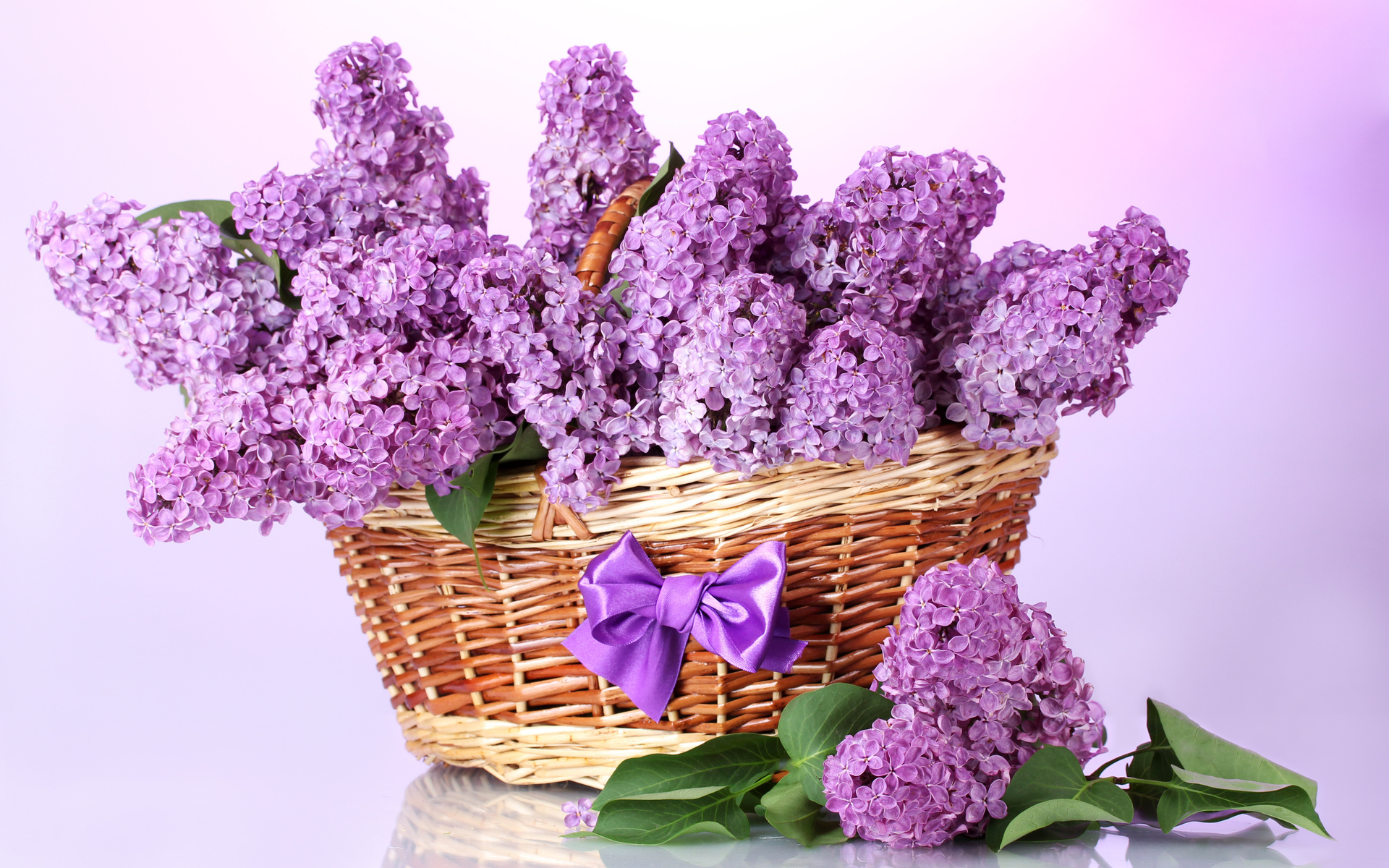 Bow Basket Leaves Flowers Branches Lilac Spring Wallpaper