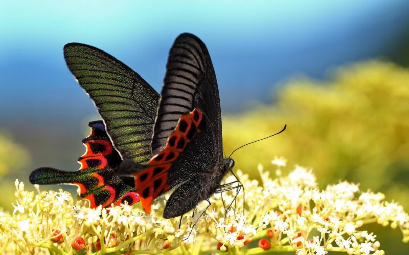 butterfly flowers wings macro wallpaper