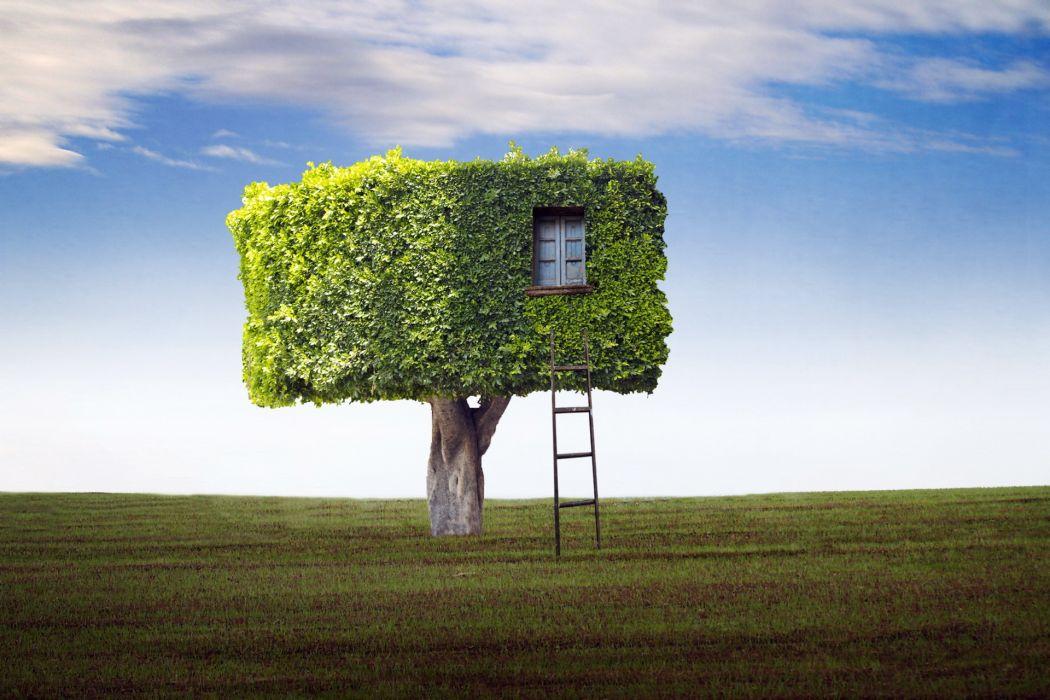 field  tree  house  ladder wallpaper