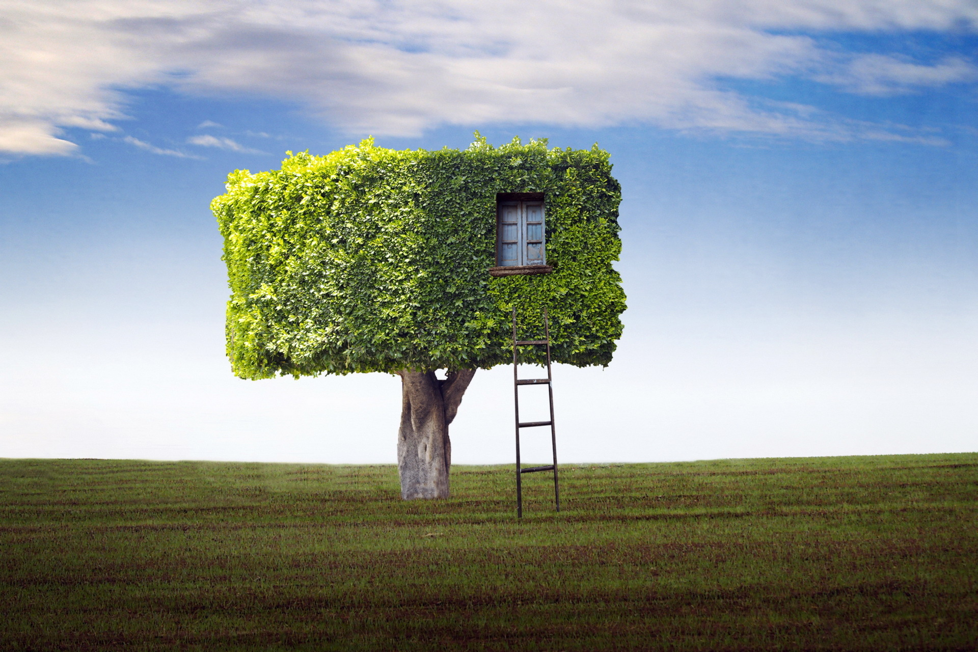 Field tree house ladder wallpaper 1920x1280 79371 for Tree wallpaper for home