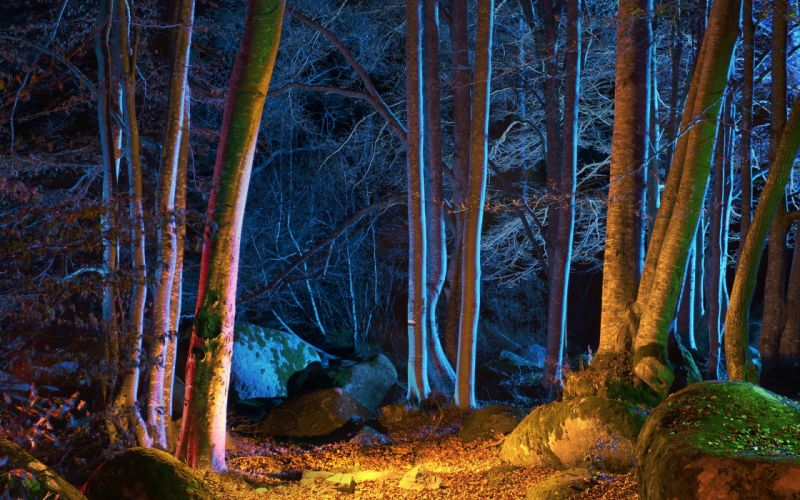 Forest Autumn Trees Night Leaves Nature wallpaper