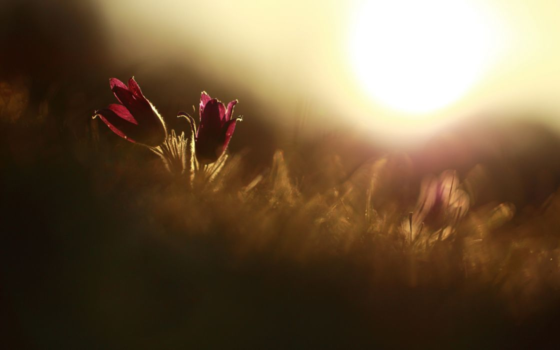 flowers macro sunlight wallpaper