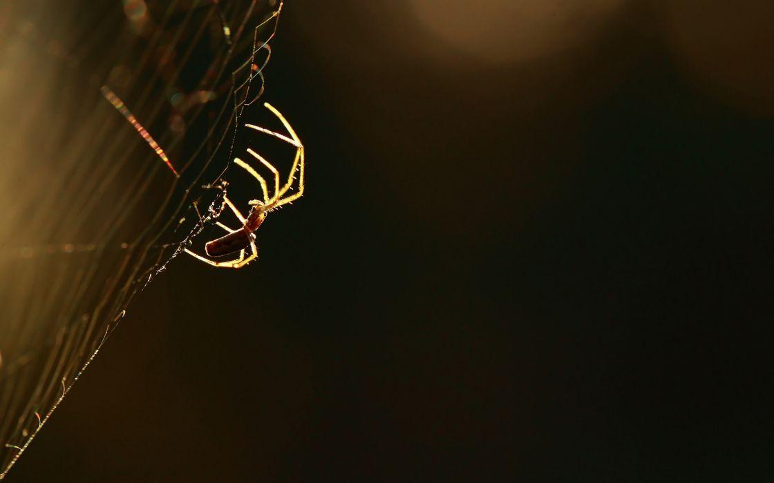 Spider Macro Spider Web wallpaper
