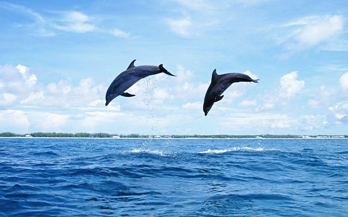 dolphins dolphin ocea sea drops wallpaper