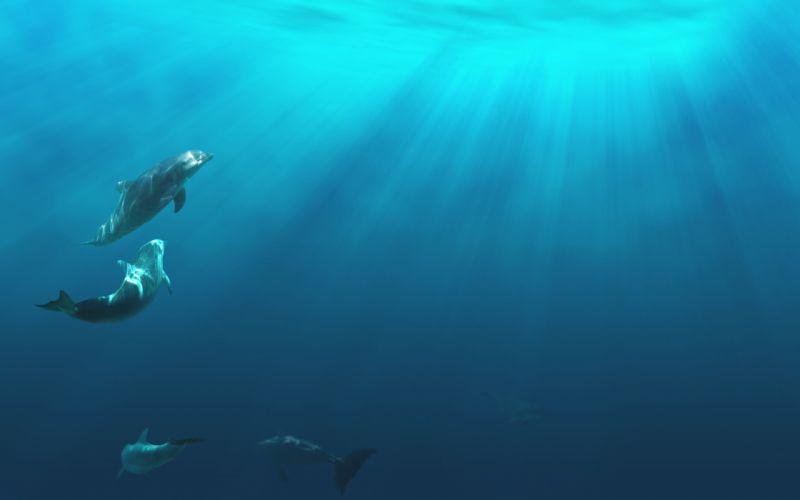 dolphins dolphin ocea sea underwater q wallpaper