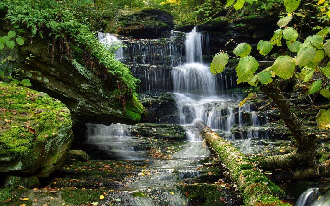 waterfall trees vegetation nature moss rivers forest wallpaper