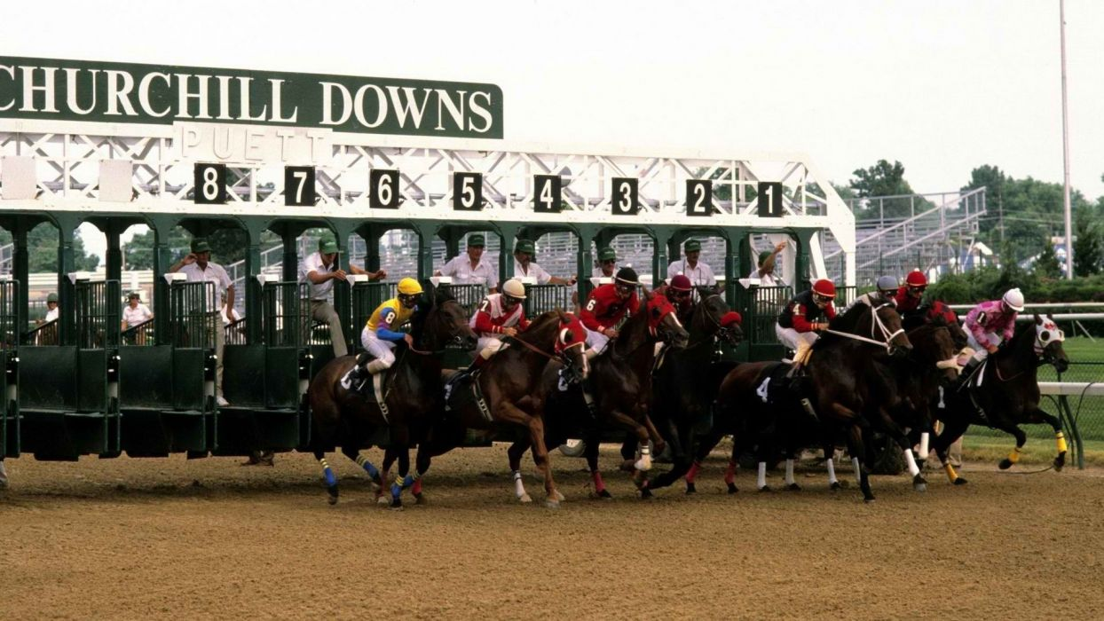 animals usa horses racing horse racing louisville horse wallpaper
