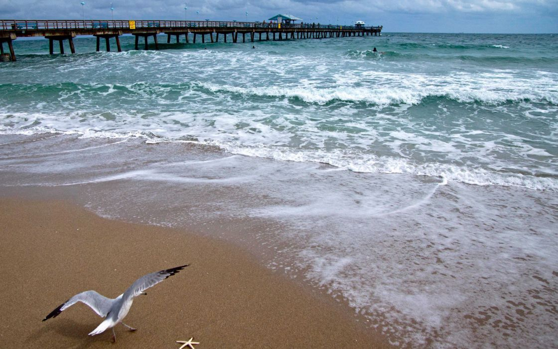 bridge seagull ocean coast sea beach beaches pier dock wallpaper