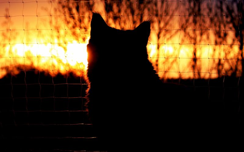 Cat Silhouette Sunset fence mood wallpaper