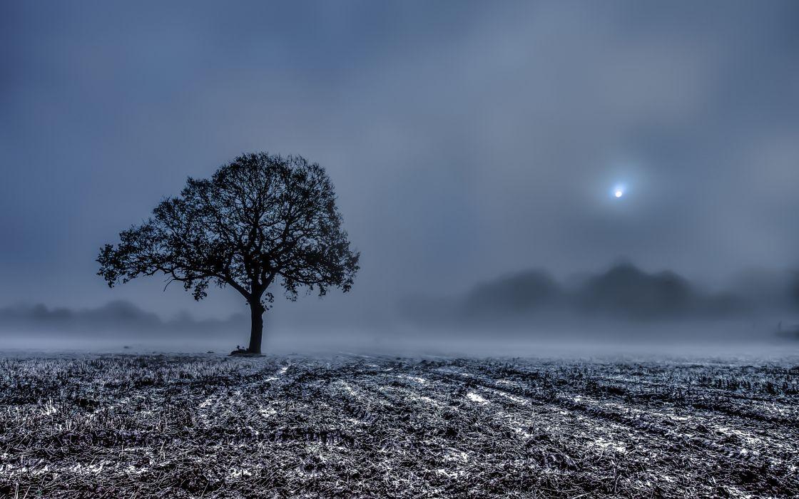 field wood stubble fog morning landscapes winter frost trees wallpaper
