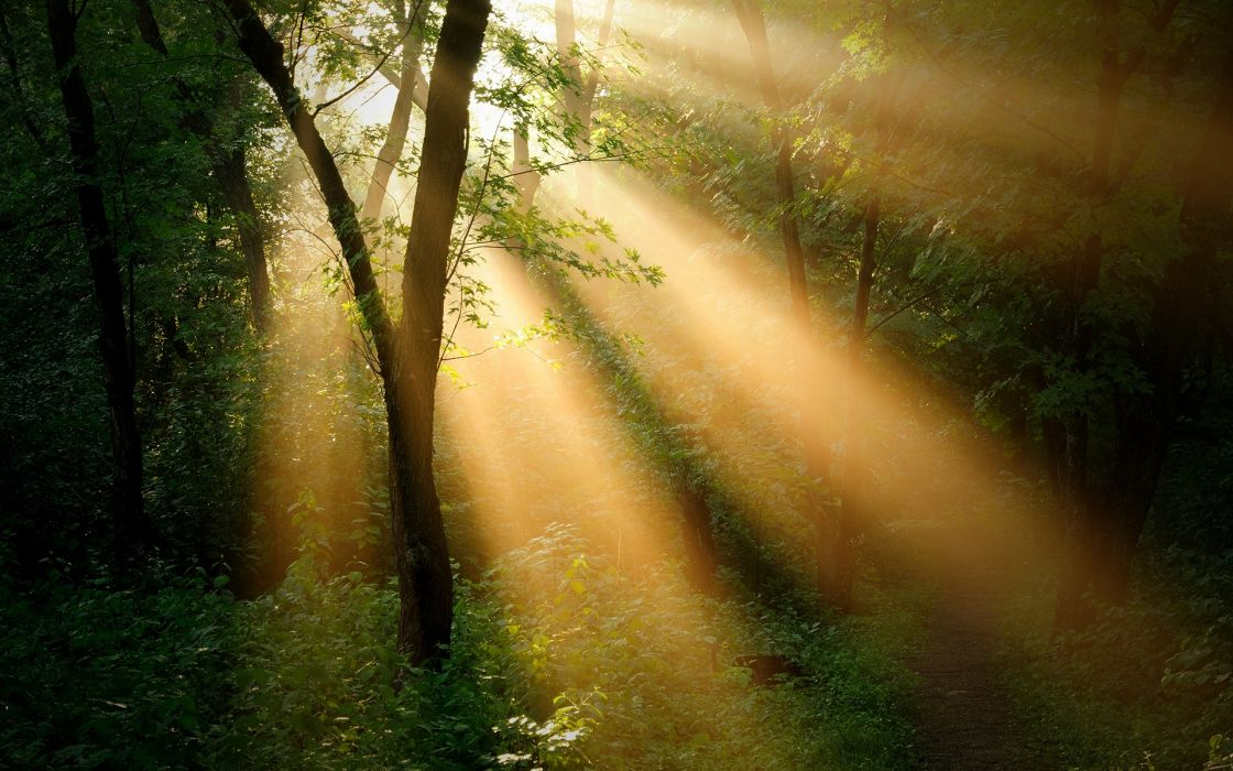 forest trees_ sun ray landscapes wallpaper