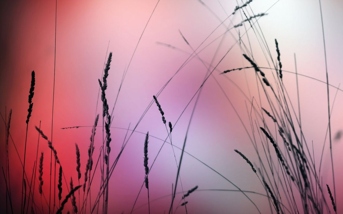 grass  nature  macro wallpaper