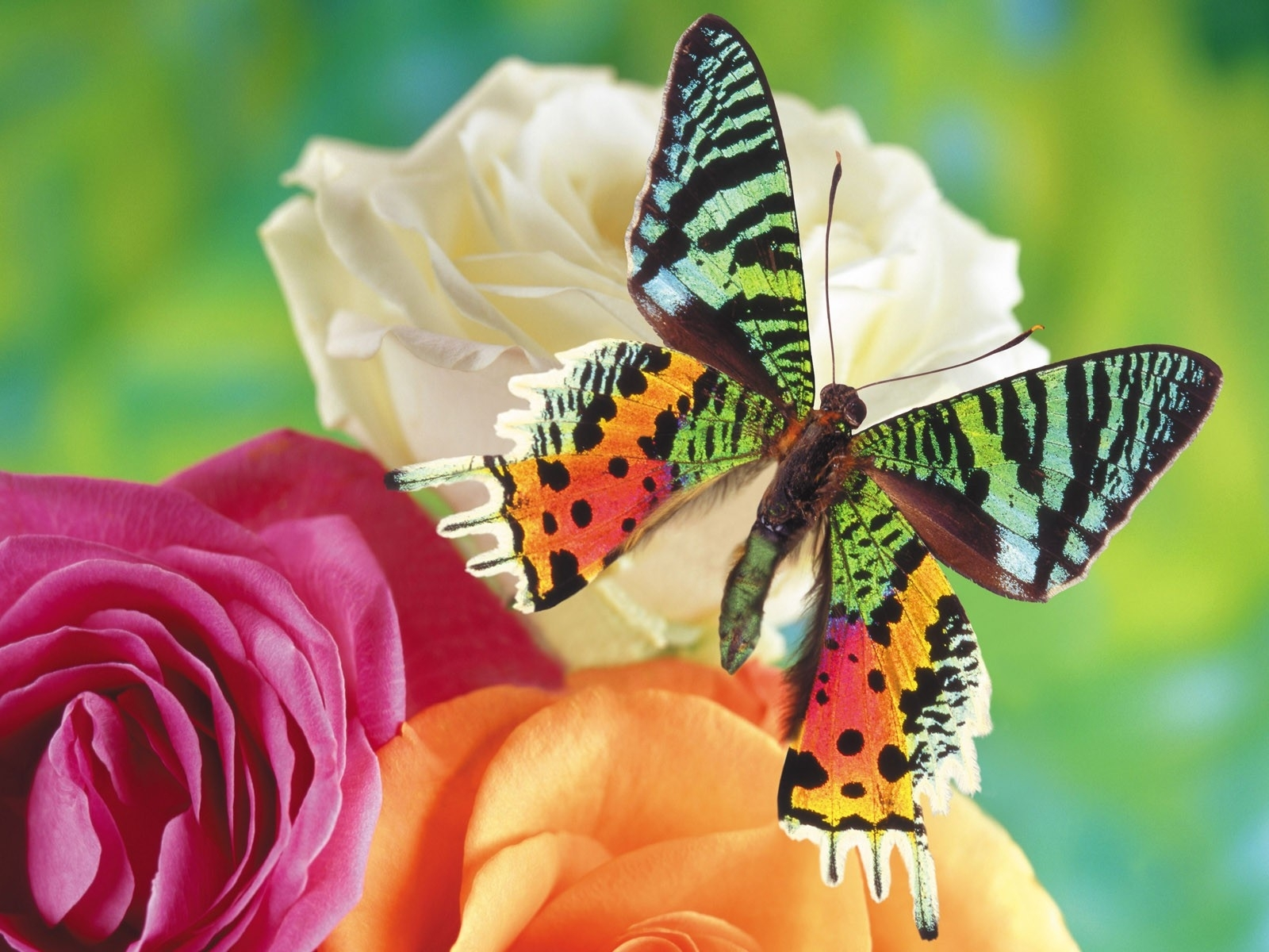 nature multicolor flowers insects butterflies butterfly. Black Bedroom Furniture Sets. Home Design Ideas