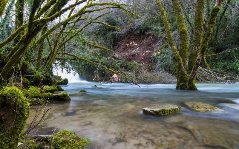 River Trees Moss Forest Rocks Stones wallpaper