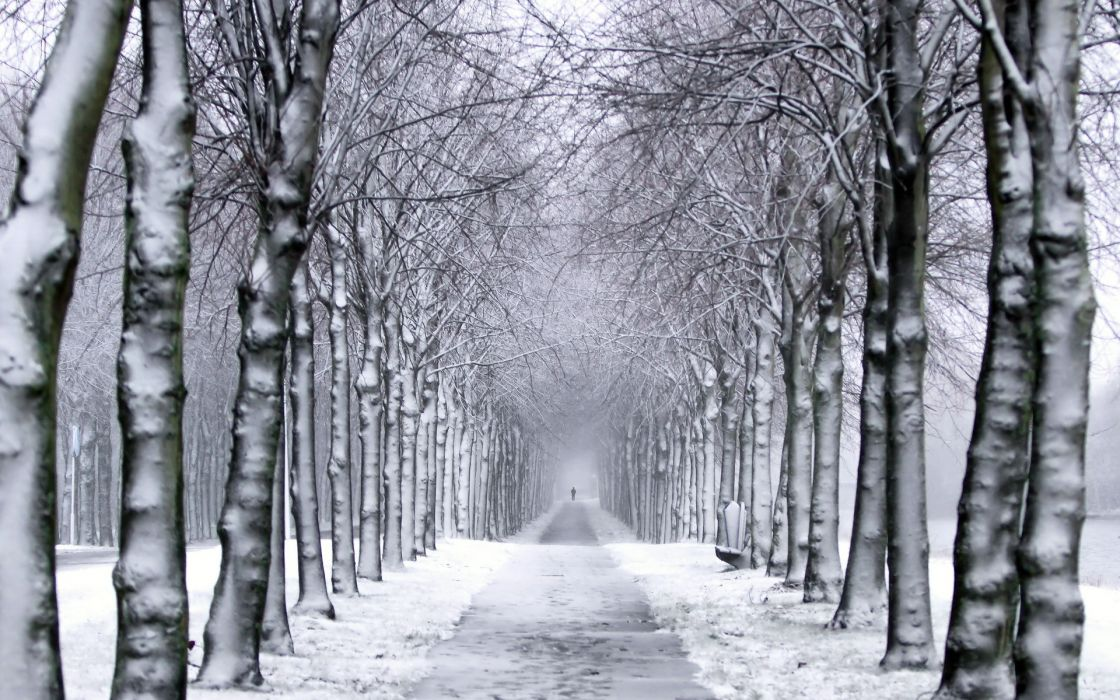 trees  park  winter snow trail wallpaper