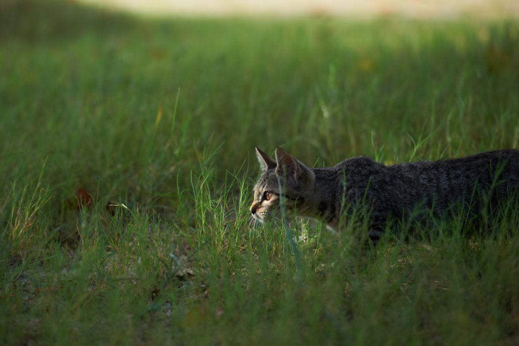 cats grass wallpaper