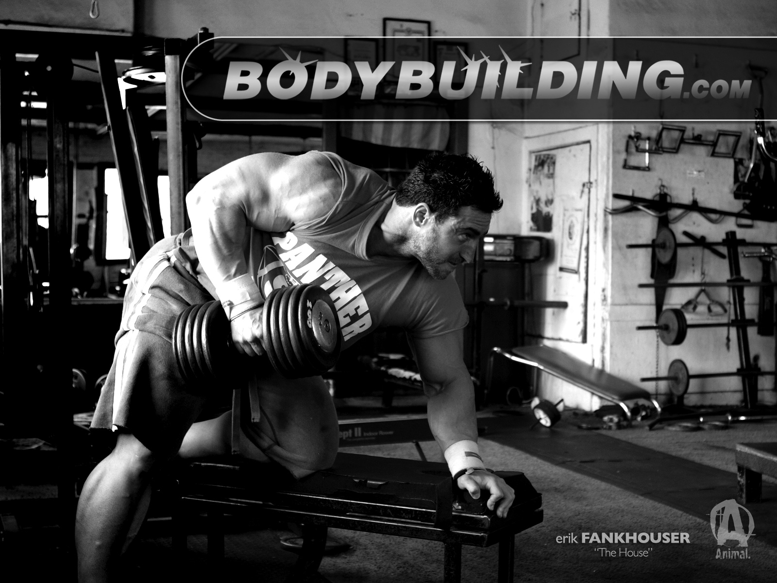 Gym Bodybuilding Wallpaper 1600x1200 81870 Wallpaperup