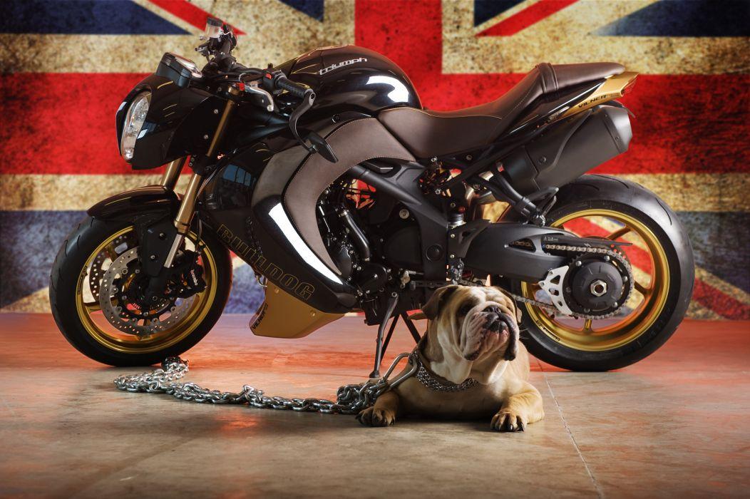 2012 Vliner Triumph Speed Tripple Bulldog sportbike sportbikes tuning bike i wallpaper