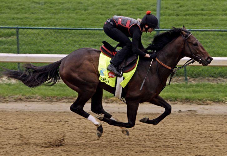 horse horses sport sports race racing q wallpaper