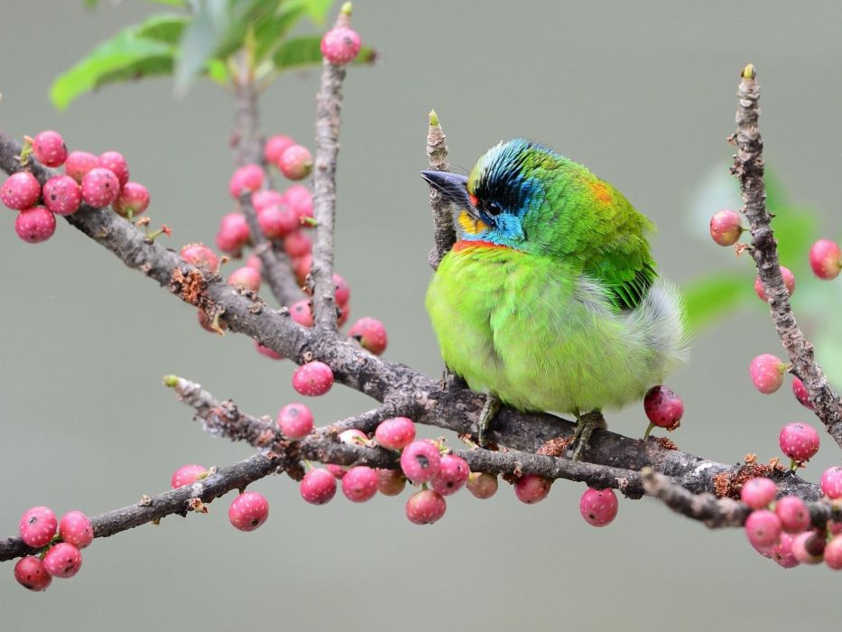 birds bird animals animal wallpaper