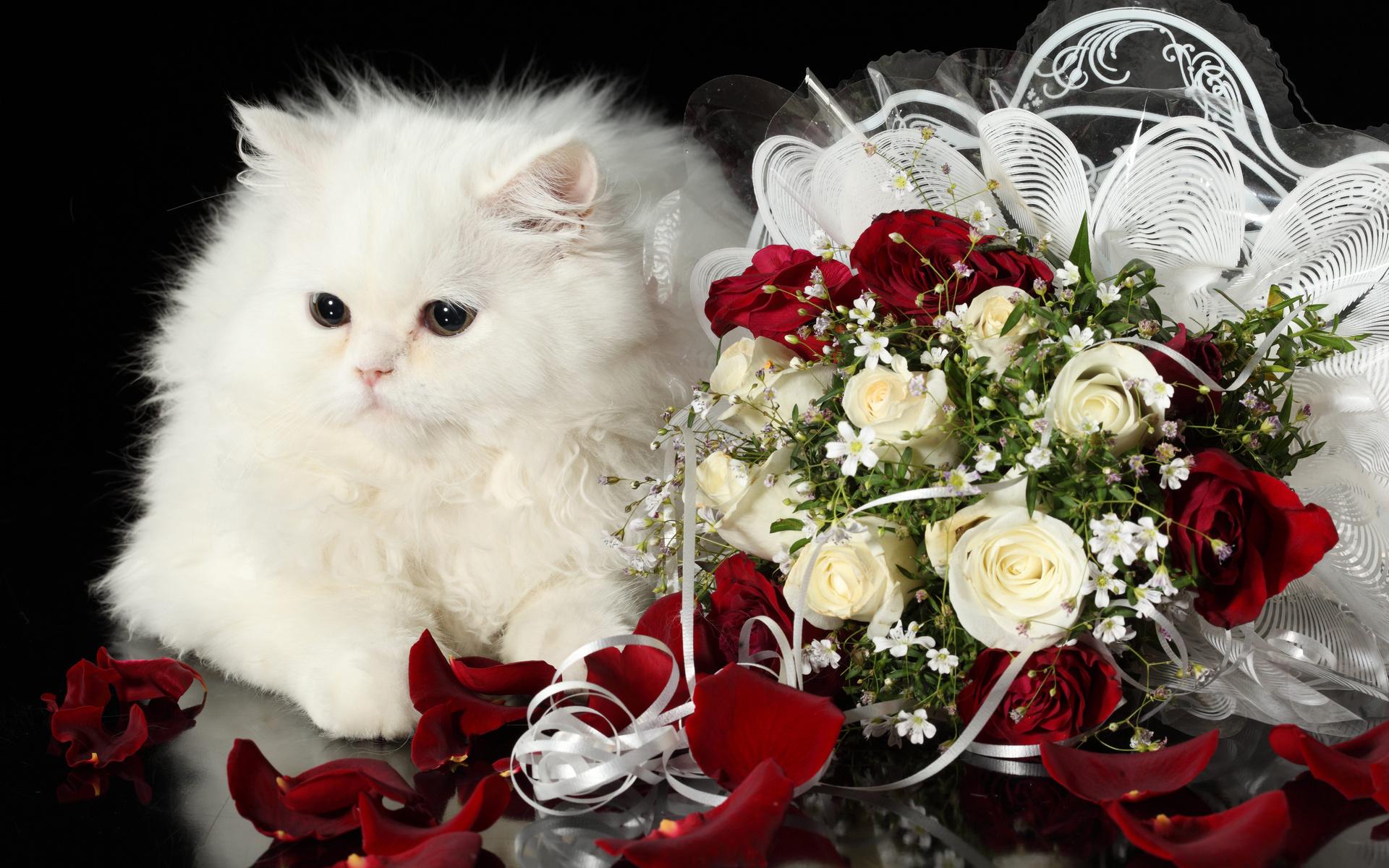 Cat Kitten Kittens Holidays Holiday Baby Petals Flowers Wallpaper 1920x1200 82749 Wallpaperup