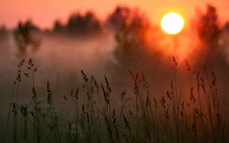 sunset sun forest grass macro wallpaper