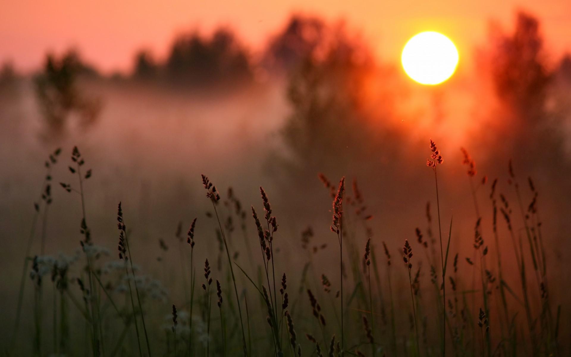 Sunset Sun Forest Grass Macro Wallpaper 1920x1200
