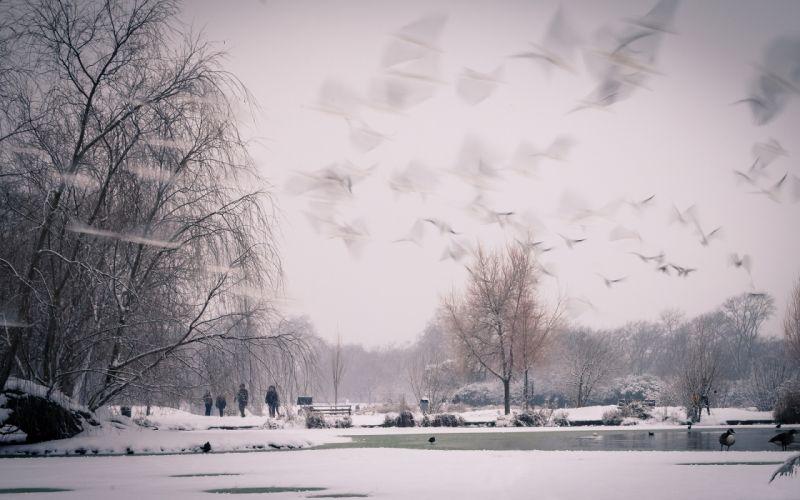 Snow Winter Trees Park Birds Timelapse Pond wallpaper