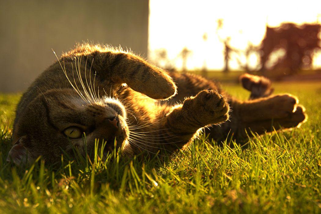 cat grass humor wallpaper